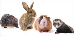 Kleintiere und Nagetiere