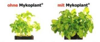 Mykoplant - Mykorrhiza