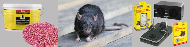 Bekämpfung von Ratten und Hausmäusen